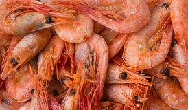 Cooked shrimps. Royalty Free Stock Photography