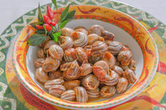 Cooked snails with tomato sauce Stock Photos