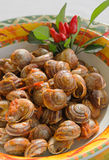 Cooked snails with tomato sauce Royalty Free Stock Photos