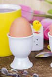 Cooked sof tboiled eggs Royalty Free Stock Photo