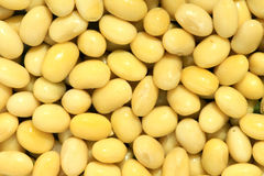 Cooked soybean. The background of cooked soybean Stock Image