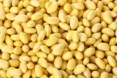 COOKED SOYBEAN Royalty Free Stock Images
