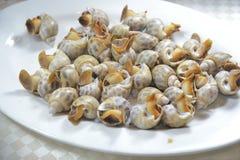 Snail Clams stock photography