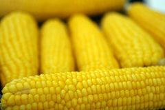 Cooked sweet corn. Close up of cooked sweet corn on the cob(narrow depth of field stock photography
