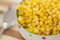 Cooked sweetcorn Stock Photography