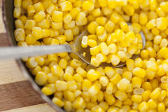 Cooked sweetcorn Stock Images