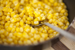 Cooked sweetcorn Royalty Free Stock Images