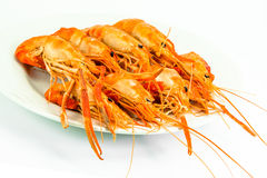 Cooked tiger prawn Stock Images