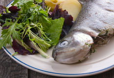 Cooked trout on plate Stock Images