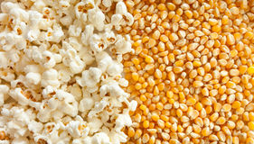 Cooked and uncooked pop-corn texture Royalty Free Stock Image
