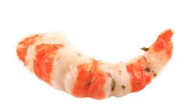 Cooked unshelled tiger shrimp. Stock Image
