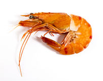 Cooked unshelled tiger shrimp Stock Images