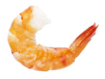 Cooked unshelled tiger shrimp Stock Photos