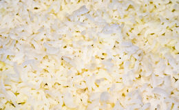 Cooked white rice grains. Cooked white rice with long grains stock photography