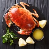 Cooked whole brown edible crab served with sauce, lemon and pars. Ley on a stone board close-up on a black background. top view from above royalty free stock photography