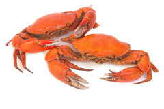 Cooked whole crabs Stock Photography