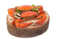 Cooked whole crabs. Isolate on white stock images