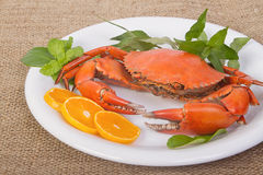 Cooked whole crabs. Isolate on white royalty free stock photo