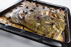 Turbot fish in baking pan oven with potatoes olives and aromatic royalty free stock photos