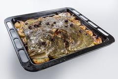 Turbot fish in baking pan oven with potatoes olives and aromatic royalty free stock photo