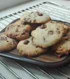 Cookies. Baked american chocolate chip cookies Stock Image