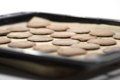 Cookies on a baking pan Stock Images