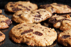 Cookies on a baking tin Stock Image