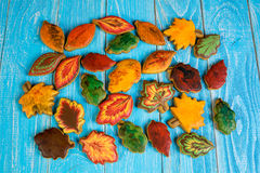 Cookies caseiros do pão-de-espécie sob a forma das folhas do bordo, do Linden e do carvalho Foto de Stock