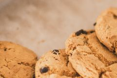cookies with chocolate in the plate. chocolate chips on cookies close to the lens royalty free stock images