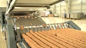 Cookies on conveyor at food plant. Food industry. Pastry bakery on manufacturing line at food factory. Cookies conveyor stock footage