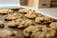 Cookies on baking sheet Royalty Free Stock Image