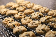 Cookies de amêndoa com pedaços de chocolate Fotos de Stock Royalty Free