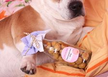 Cookies for dogs Royalty Free Stock Photo
