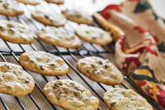 Cookies mornas dos pedaços de chocolate que refrigeram em cremalheiras de fio Foto de Stock
