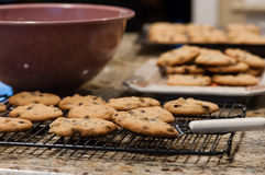 Cookies. Warm cookies straight from the oven Royalty Free Stock Photos