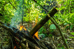 Cooking in bamboo tube. Cooking in bamboo tube in forest Royalty Free Stock Photos