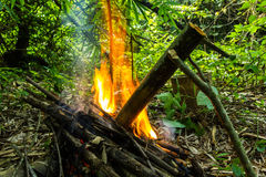 Cooking in bamboo tube. The tribal food in bamboo at forest,cooking in bamboo tube Stock Images