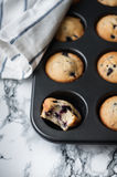 Cooking blueberry muffins. Muffins with blueberries in baking dish stock photos