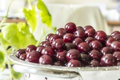 Cooking cherry jam.A washed dark red berries in a colander on a background of green leaves. royalty free stock photo