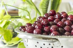Cooking cherry jam.A washed dark red berries in a colander on a background of green leaves. stock images