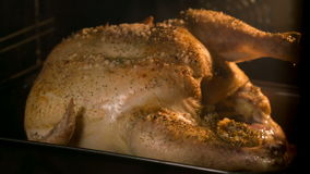 Cooking chicken in the oven stock video footage