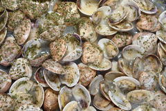 Cooking clams stock photography