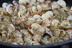 Cooking clams in the pan Stock Images