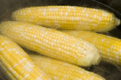 Cooking Corn Stock Image
