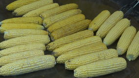 Cooking corn cobs in agriculture fair stock video footage