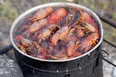 Cooking crawfish. A pot full of crawfish ready for cooking Royalty Free Stock Photo
