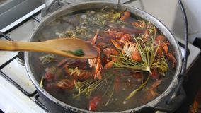 Cooking crayfish. Crayfish boil in a pot. Cooking crayfish with dill and salt stock footage