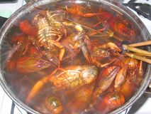 Cooking crayfish Royalty Free Stock Image