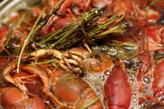 Cooking of crayfish with dill Royalty Free Stock Photos