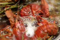 Cooking crayfish with dill Royalty Free Stock Photos